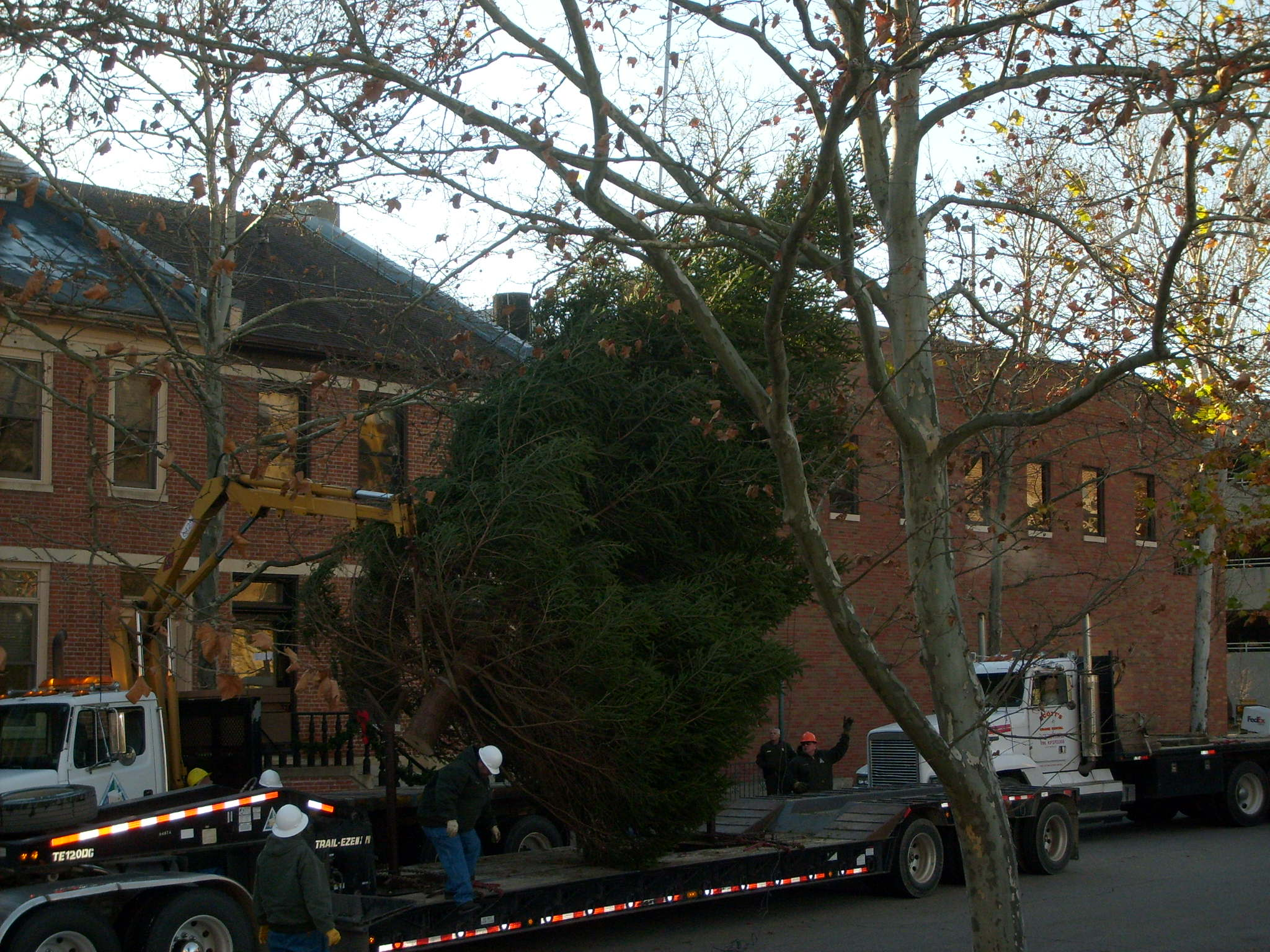 Conservation Department staff unloads the Governor's Mansion official Christmas tree on Madison Street in Jefferson City. (Missourinet photo, 2009)