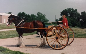 Mindy Griffin driving a Clydesdale.