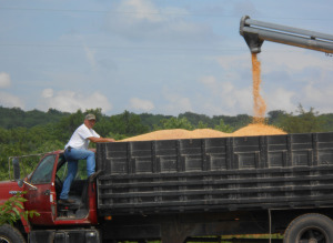 Corn is loaded onto a truck, (courtesy; Missouri Department of Agriculture, Corinne Mallinckrodt)