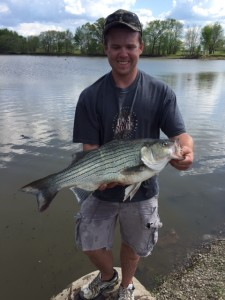 James Lucas of O'Fallon with his hybrid striped bass record catch