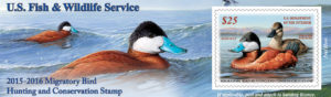 2015-16 Duck Stamp (photo/fws.gov)