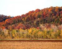 Fall colors peak in Missouri (Photo courtesy of Missouri Department of Conservation)