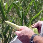 USDA Designates 25 Missouri counties as primary natural disaster areas